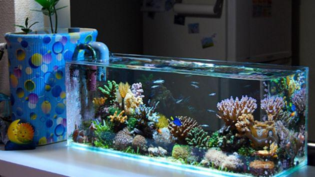 ¿Cuántos peces quedan en el estanque? Este es el acertijo que pocos pueden resolver