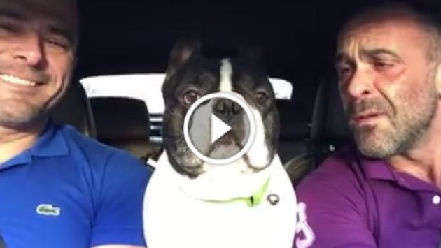¡Otra más! Bulldog francés y su dueño cantan 'Hello' de Adele [VIDEO]