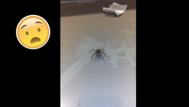 ¡El video de esta araña te pondrá los pelos de punta!
