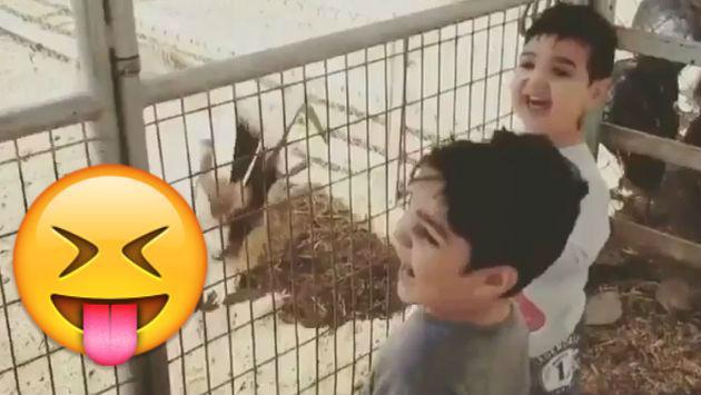 Este niño imitó a una cabra de una forma bastante dolorosa [VIDEO]