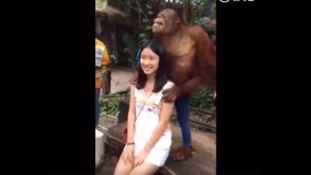 ¡Amor a primera vista! Este chimpancé se puso 'cariñoso' con turista [VIDEO]