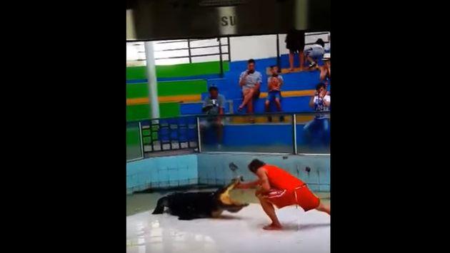 ¡Cocodrilo atacó a su entrenador en plena presentación! [VIDEO]