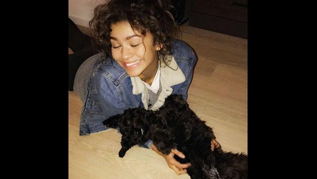 El perro de Zendaya tiene una vida que seguro envidiarás