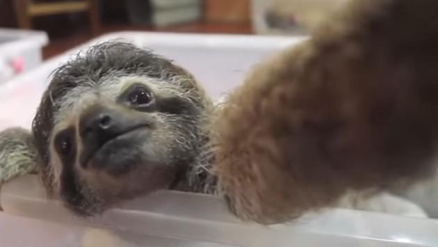 El selfie de este oso perezoso te encantará [VIDEO]