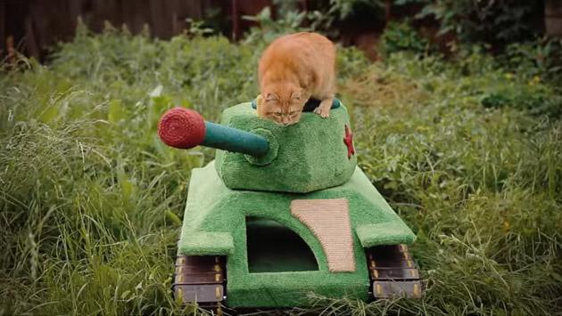 El tanque para gatos que se volvió viral de YouTube [VIDEO]