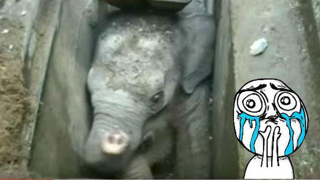 Rescate de este bebé elefante atorado en un desagüe te conmoverá [VIDEO]