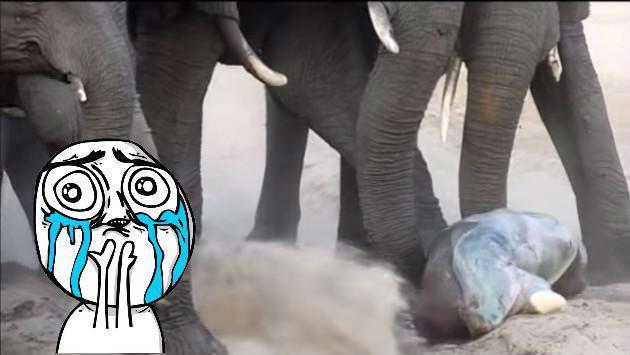 El video de este bebé elefante te conmoverá por una buena razón