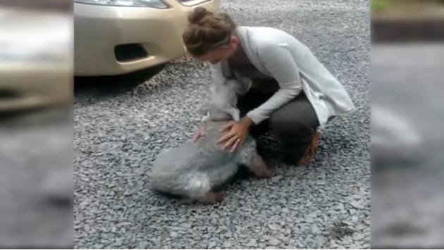 Este perro se 'desmaya' al ver a su dueña luego de dos años de ausencia [VIDEO]
