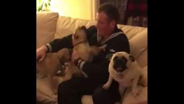 Tierno reencuentro de un marino con sus perros es viral [VIDEO]