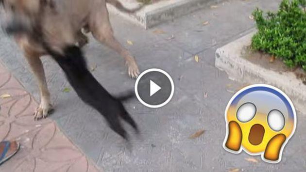 ¿Gata ninja? Mira cómo se enfrenta a un perro [VIDEO]