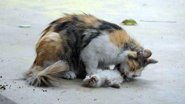 Esta gata intentó revivir así a sus gatitos asesinados [FOTOS]