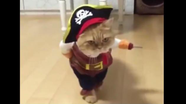 El gatito pirata la rompe en Facebook