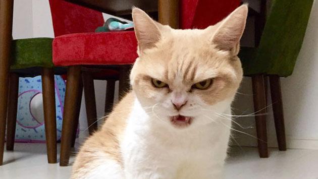 Tu gato puede matarte, y es en serio