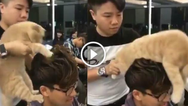 ¡Este gato es el mejor peluquero del mundo! ¡No vas a creer lo que hizo! [VIDEO]