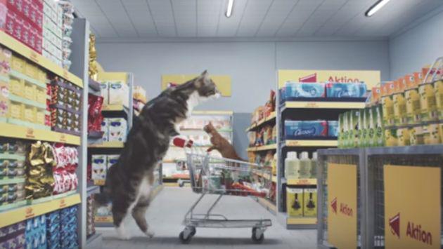 Así se verían los gatos comprando en un supermercado [VIDEOS]