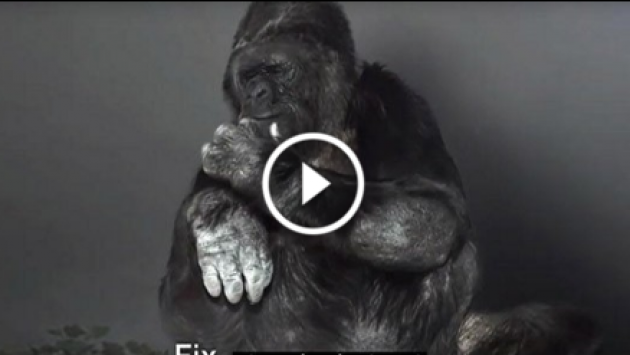OMG! Este gorila tiene un mensaje importante que dar. ¡Chécalo! [VIDEO]