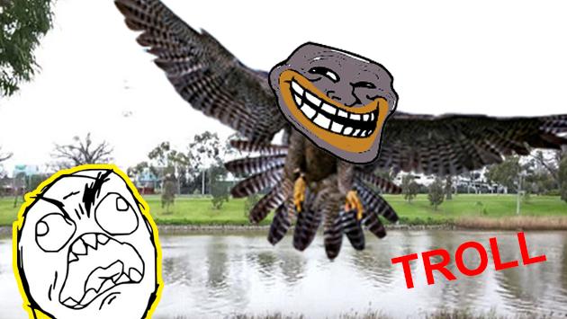 No vas a ver nada más 'troll' hoy que este halcón en YouTube [VIDEO]