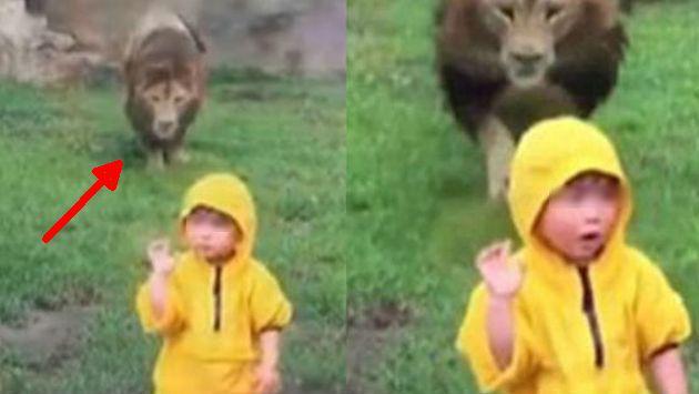 ¡Niño saludó a un león sin saber la reacción que el animal tendría! [VIDEO]