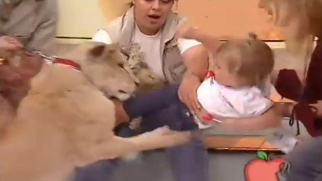 ¡Leona atacó a una niña y reacción de entrenadora genera polémica en redes! [VIDEO]