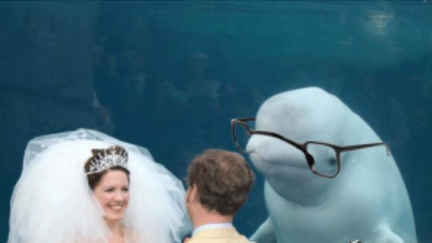 Nunca se imaginaron que este animal se aparecería en su matrimonio [FOTO]