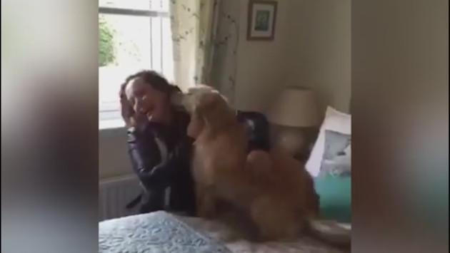 Mira el reencuentro de este perro con su dueña que estuvo ausente por 7 meses (VIDEO)