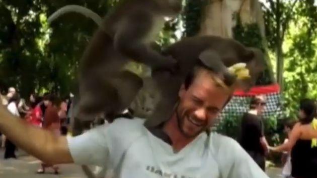 ¡Estos monitos se pusieron 'calentones' en el hombro de un turista! [VIDEO]