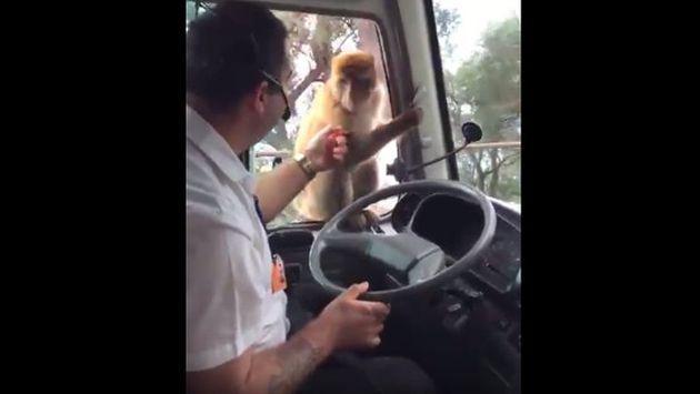 OMG! Mono se pasó de 'vivo' y robó la comida de este chofer [VIDEO]