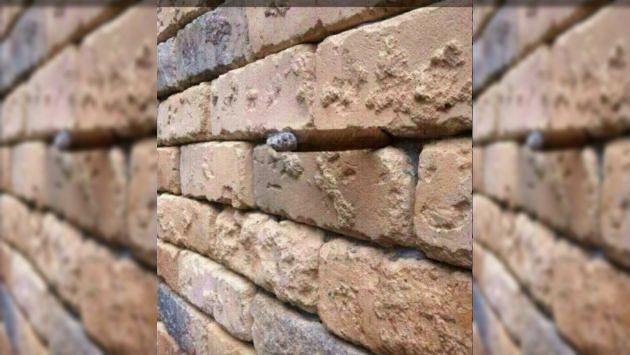 Muchos intentan descubrir la ilusión óptica de esta foto. ¿Tú puedes?