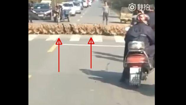 Esto es lo que pasa cuando cientos de patitos intentan cruzar una avenida [VIDEO]