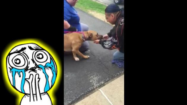 Mira cómo reaccionó este perrito al reencontrase con su amo después de dos años [VIDEO]