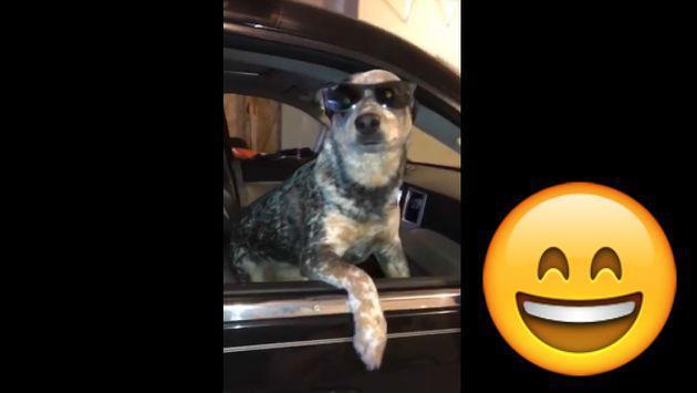 Este perrito es el rey del 'Mannequin Challenge' [VIDEO]