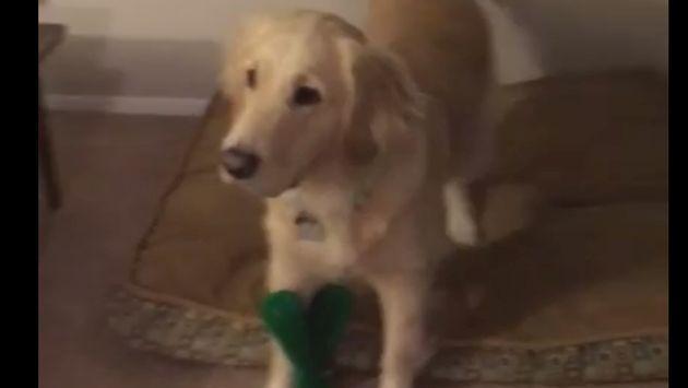 ¡Dueño de perro se disfraza de su juguete favorito y mira cómo reaccionó el can! [VIDEO]