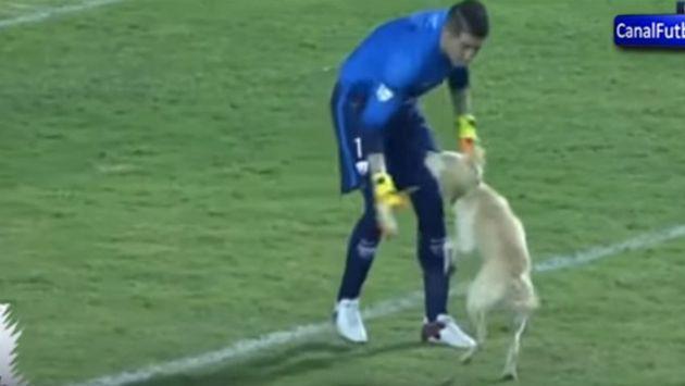 Este perrito entró a la cancha durante partido y se robó el show [VIDEO]