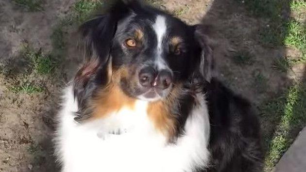 Conoce al perro de dos narices que es sensación en YouTube [FOTOS + VIDEO]