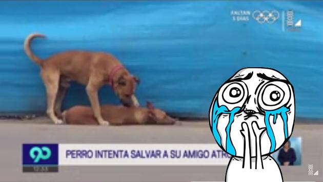 Perro intenta reanimar a su compañero atropellado en Chincha y conmueve a todos [VIDEO]