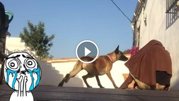 ¡La reacción de este perro al reencontrarse con su dueño es conmovedora! [VIDEO]