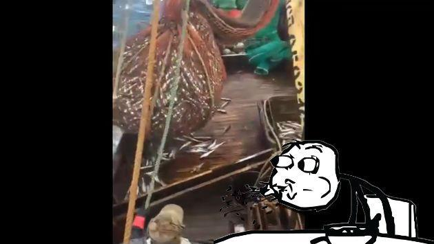 ¡Abrieron una red llena de pescados sin saber la sorpresa que les esperaba! [VIDEO]