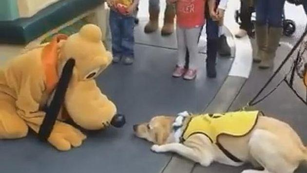 ¡No vas a creer la reacción de este perro al conocer a 'Pluto'! [VIDEO]