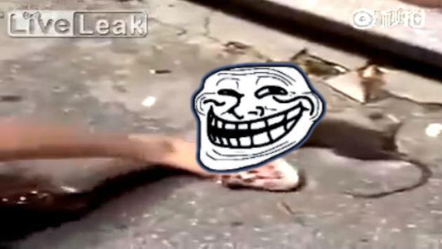 ¡Se burló de una rata y esta la trolleó de forma épica! [VIDEO]