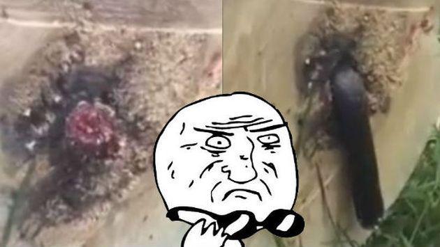 Este hombre no se imaginó lo que iba a encontrar al talar un árbol [VIDEO]