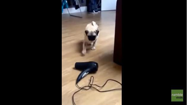 ¡Te sorprenderás al saber a qué le tiene miedo este perro! [VIDEO]