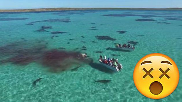 ¡Imágenes impactantes! Una ballena fue atacada por 70 tiburones [VIDEO]