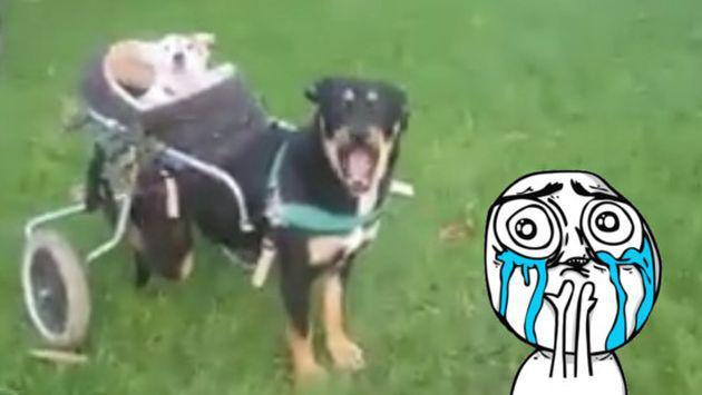 Perro con discapacidad y su amigo ciego y sordo conmueven a más de uno [VIDEO]