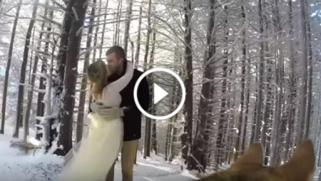 ¡Increíble! Un perro grabó el matrimonio de sus amos [VIDEO]