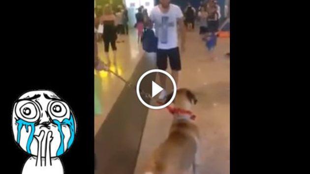 La reacción de este perro al ver a su amo después de tres años te conmoverá [VIDEO]