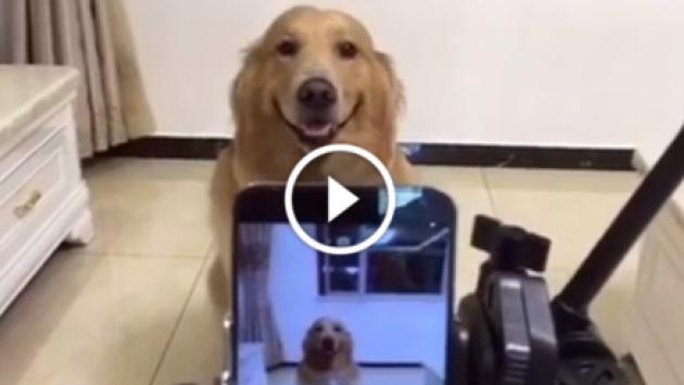 Perro sonríe cada vez que le toman una foto [VIDEO]