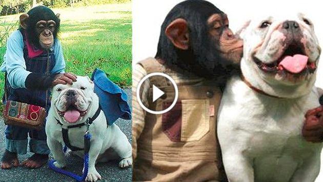 ¡La amistad entre este chimpancé y un perro enternecerá a cualquiera! [VIDEO]