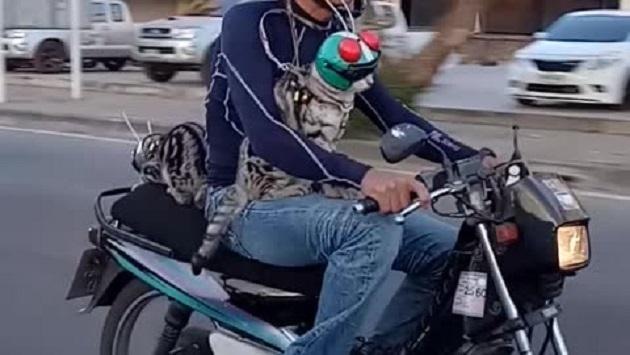 Gatos en motocicleta son un éxito en las redes sociales (VIDEO)