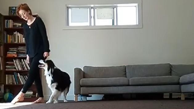Perro es viral por imitar pasos de baile de su dueña [VIDEO]