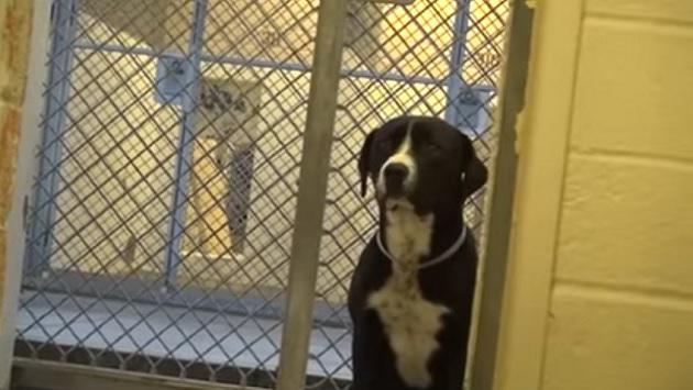 Perro recién adoptado enternece las redes sociales [VIDEO]